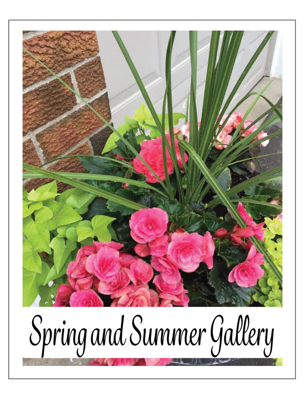 spring-and-summer-gallery