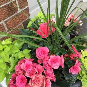 Decorative Summer Planters