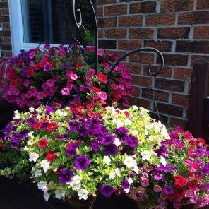 Fresh hanging floral arrangements